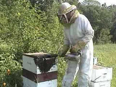Honey Bees - Life Cycle