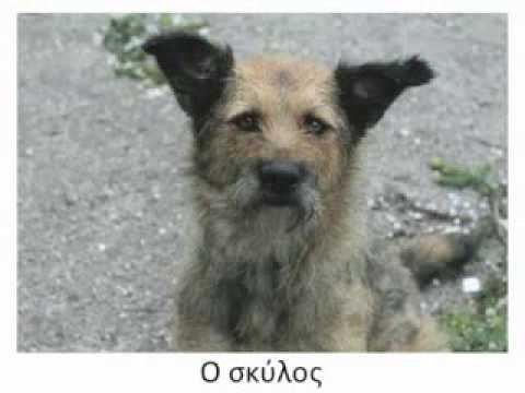 Animals in the greek language