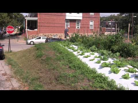 Urban Agriculture Growing in Baltimore