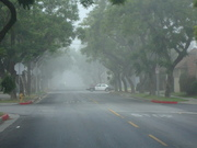 Early Morning and Fog and Patrol in Leimert Park