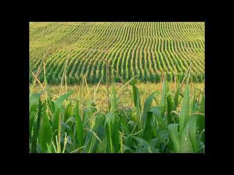 Where Corn Don't Grow
