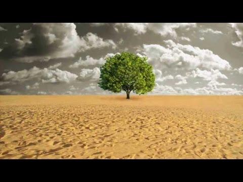 FAO: Ação contra a Desertificação