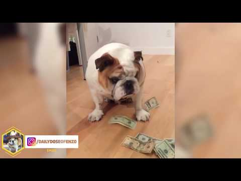 English Bulldogs Are Awesome