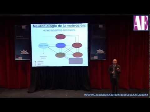 Neurobiología de la motivación - Dr. Prof. Mario Vestfrid - Neurociencias