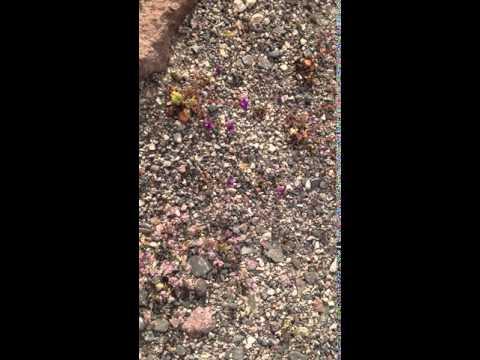 Kuolemanlaakson tuulen tuiverrus / The wind of Death Valley