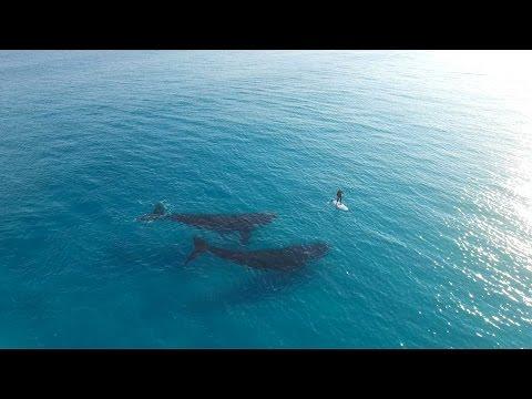 Un Paddle Boarding et 2 baleines ...