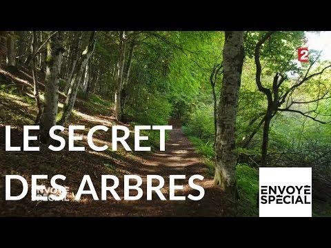 Le secret des arbres - Envoyé spécial du 26 octobre 2017 (France 2)