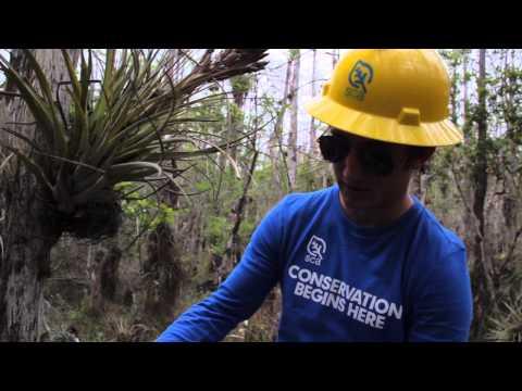 SCA Alternative Spring Break 2013: Big Cypress