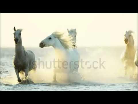 """"""" La belle Liberté originelle du cheval """" - montage perso"""