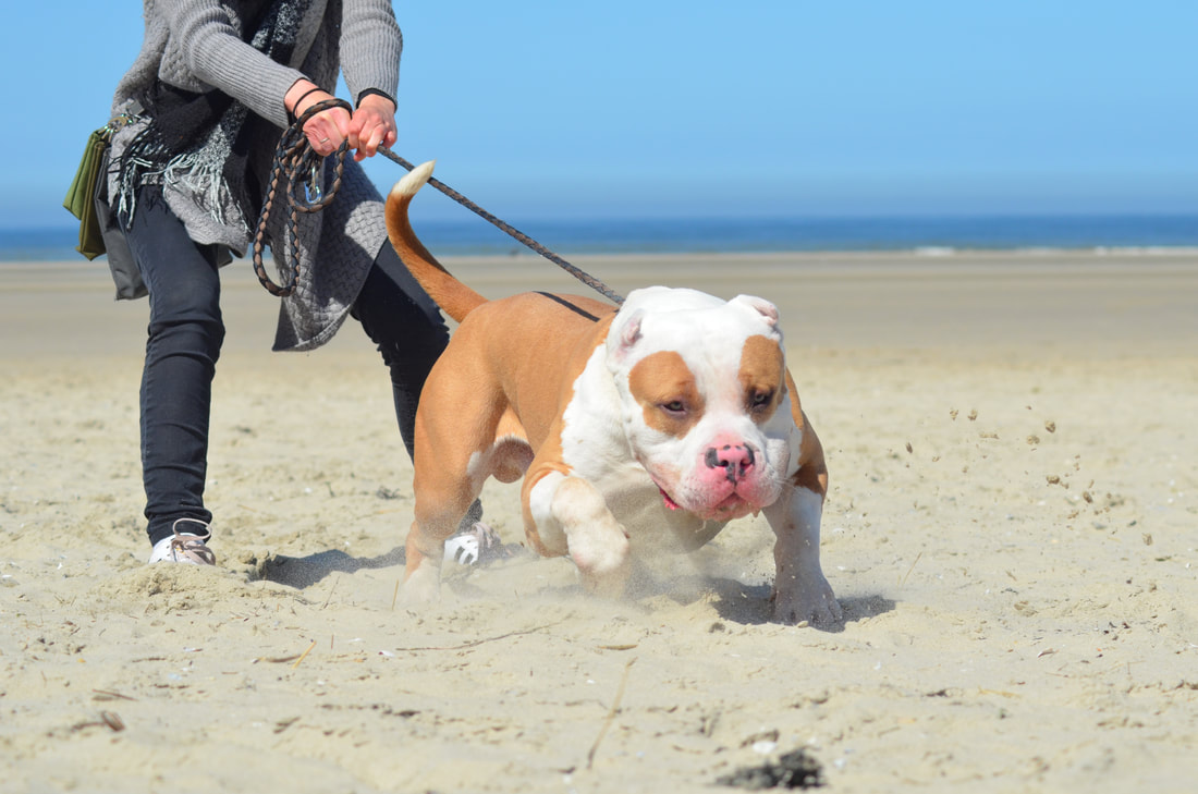 4 Steps to Prevent Leash Pulling