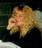 Cheryl Alexander