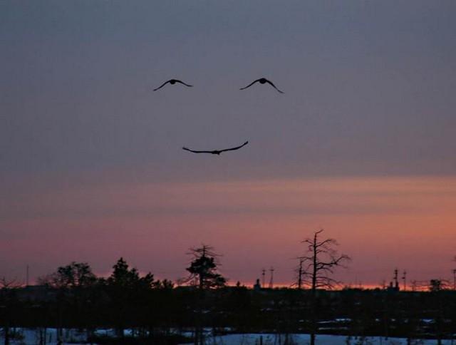 Sorriso da natureza!!!