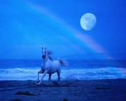 horse moon.