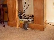 Betsy Turtle Bruyere