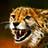 Matthew (Flaming Cheetah)