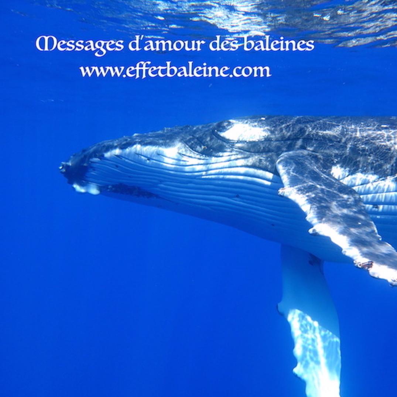 Effet baleine