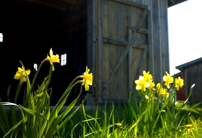 Flowers in front of Barn