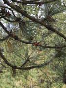 Web of Needles