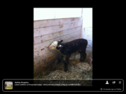 Farm Photos from around Ontario March 30th, 2013