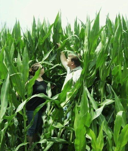 PA Corn - July 2008