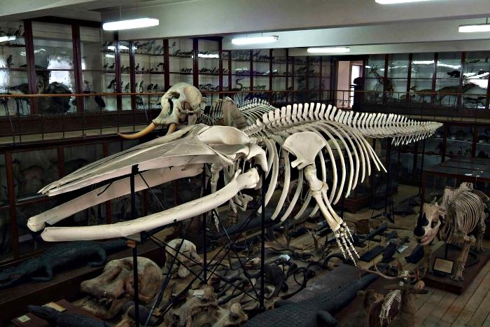 visitas no Museu de História Natural do Porto