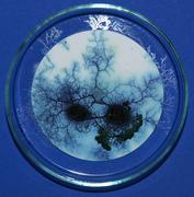Dyed plasmodium of Physarum (methylene blue)