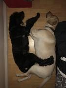 Jax and Mylo
