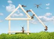 249878-andrey-pavlovs-amazing-ant-photography