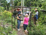 bamboo garden projects