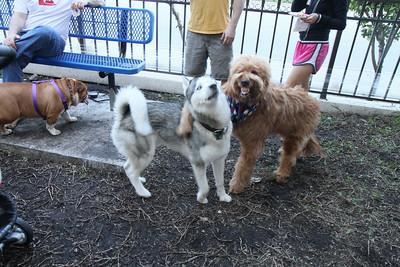 Toroman, Blue, and Monty