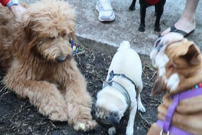 Monty, Tia, and Toroman
