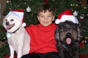 Ryley, Prince and Millie Christmas 2009