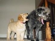 Samson & Ella