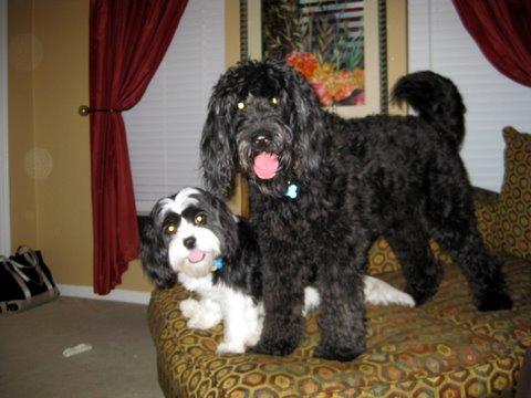 Callie and Louie 4