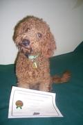 Jasper's AKC STAR Puppy Class