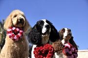 Valentine's Day 2011