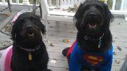 super dog and the princes AKA Banjo and Mandy[1]