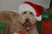 Gracie's Christmas Photo Shoot 2011
