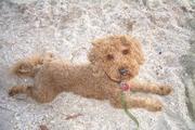 Jasper goes to the beach - Oct 2012