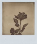 polaroid rosa