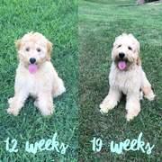 12 weeks vs. 19 weeks