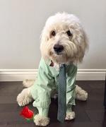 Cooper in a suit!