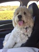 Cooper riding shotgun :)