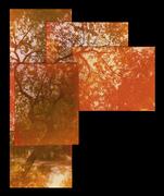 alberi - polaroid 125i expired 2006
