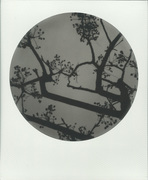 Leggendo Haruki Murakami