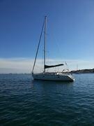 Cétacés autour des îles d'Or et voiles de St Tropez