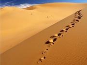 Le silence du désert, la voix de la splendeur