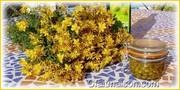 confectionnons une huile de millepertuis ensemble en pleine Nature