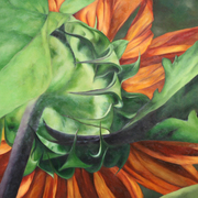 Patricia Czepiel Hayes Oil Paintings and Nature Photography