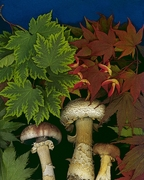 """Marty Klein """"A Fungus Among Us"""""""
